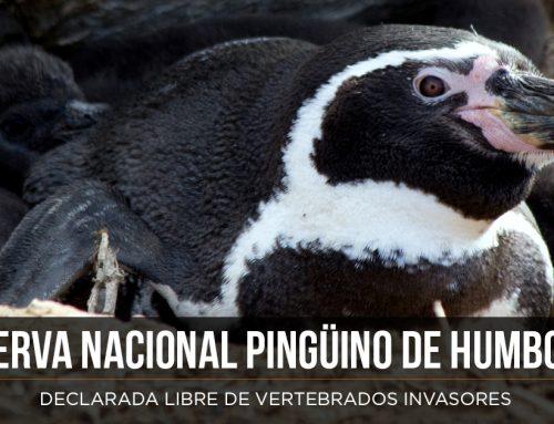 Reserva Nacional Pingüino de Humboldt a Salvo