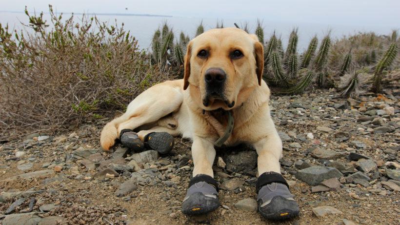 Islas Chilenas Perros adiestrados