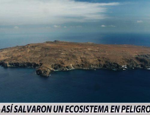 La Reserva Nacional Pingüino de Humboldt en Tele13 Chile