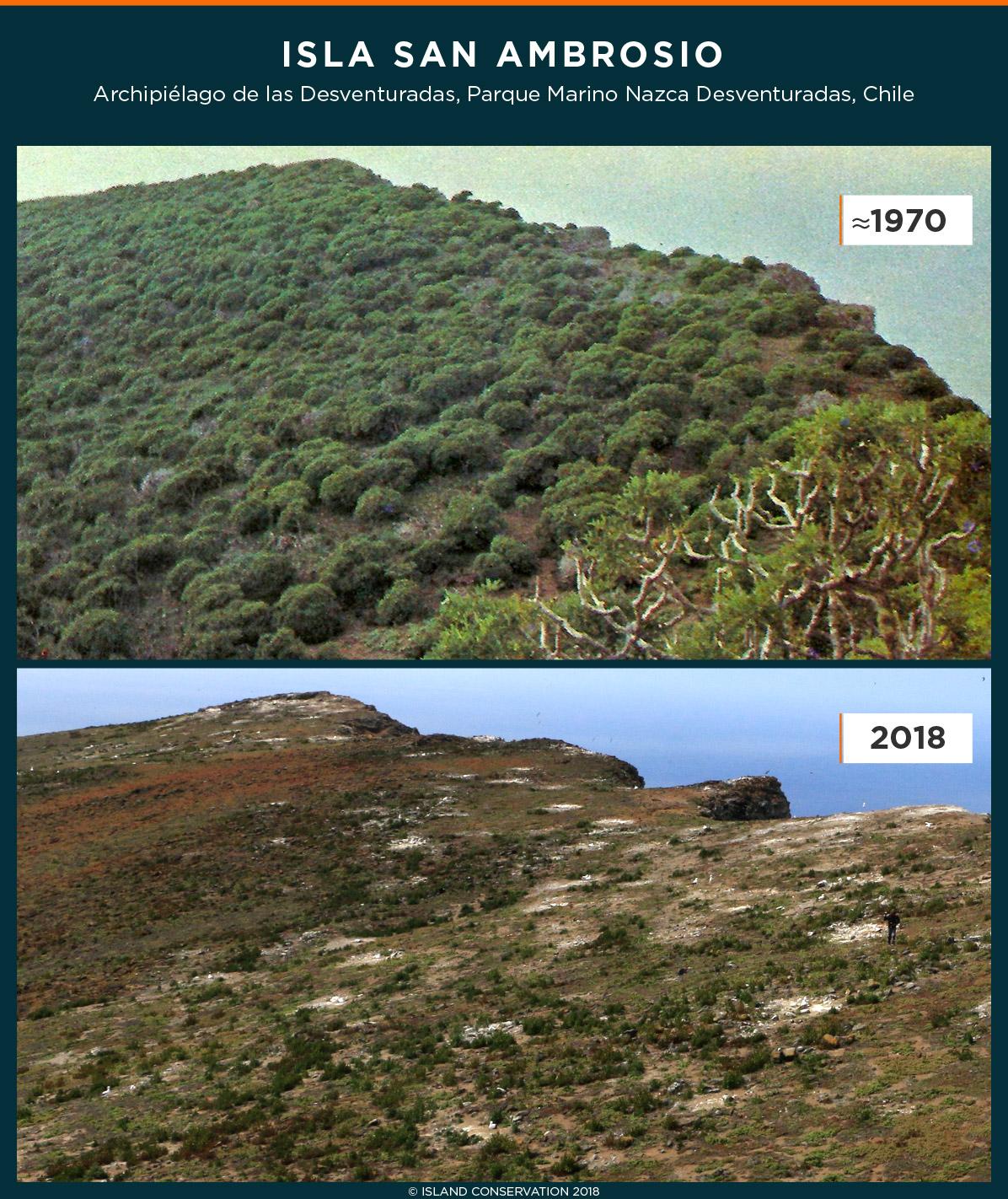 island conservation desventuradas archipielago chile san ambrosio thamnoseris lacerata