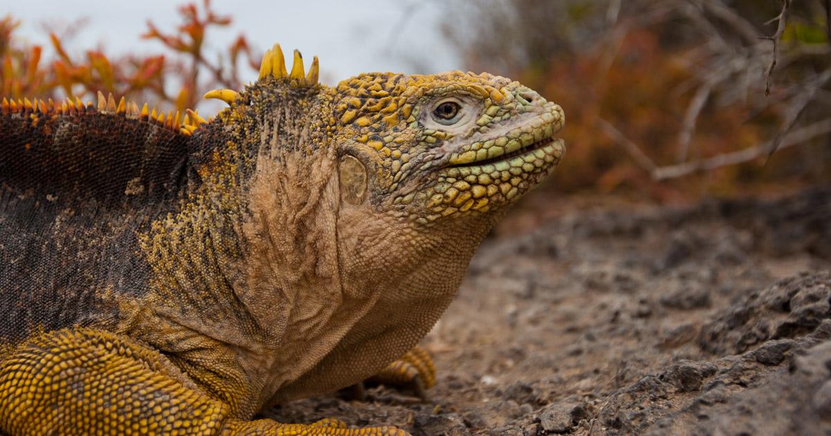 island conservation parque nacional galapagos seymour norte 2019