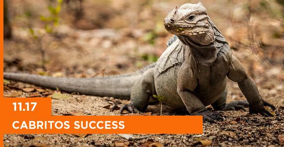 Island Conservation mona island iguana