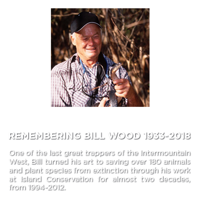 Bill Wood Island Conservation