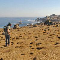 island-conservation-choros-island-burros-peruvian-diving-petrel