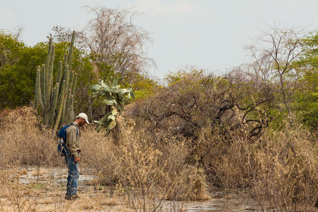 island-conservation-science-cabritos-island-dominican-republic- (11)