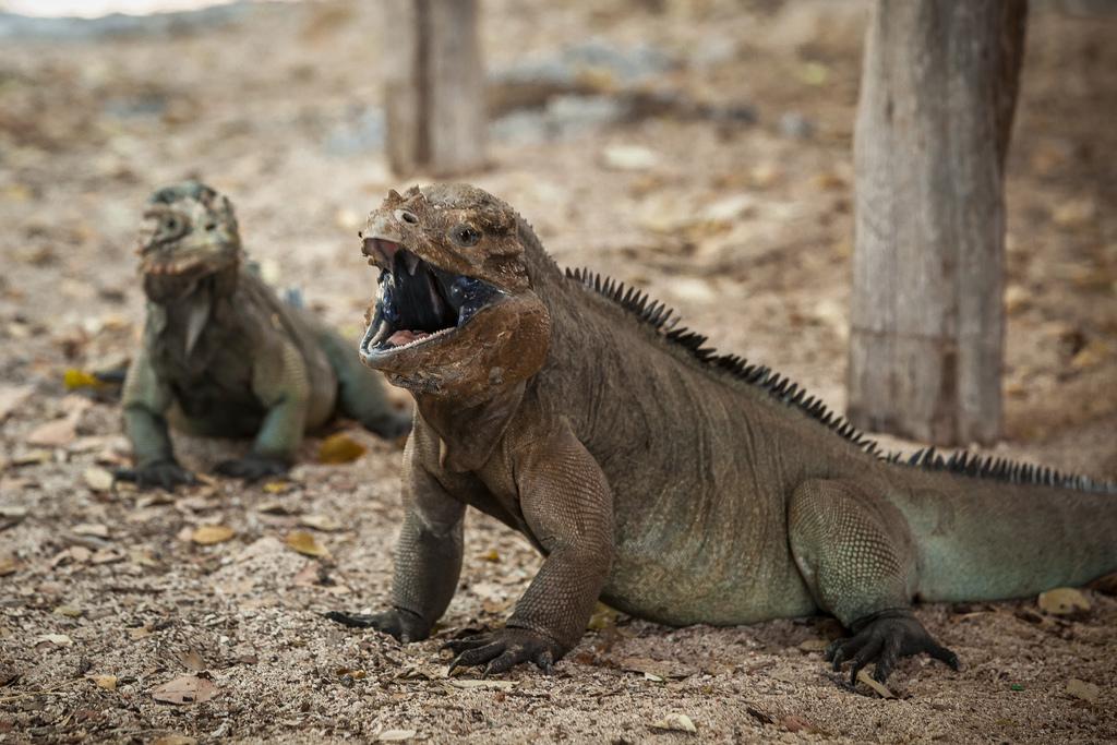 island-conservation-science-cabritos-island-dominican-republic- (17)