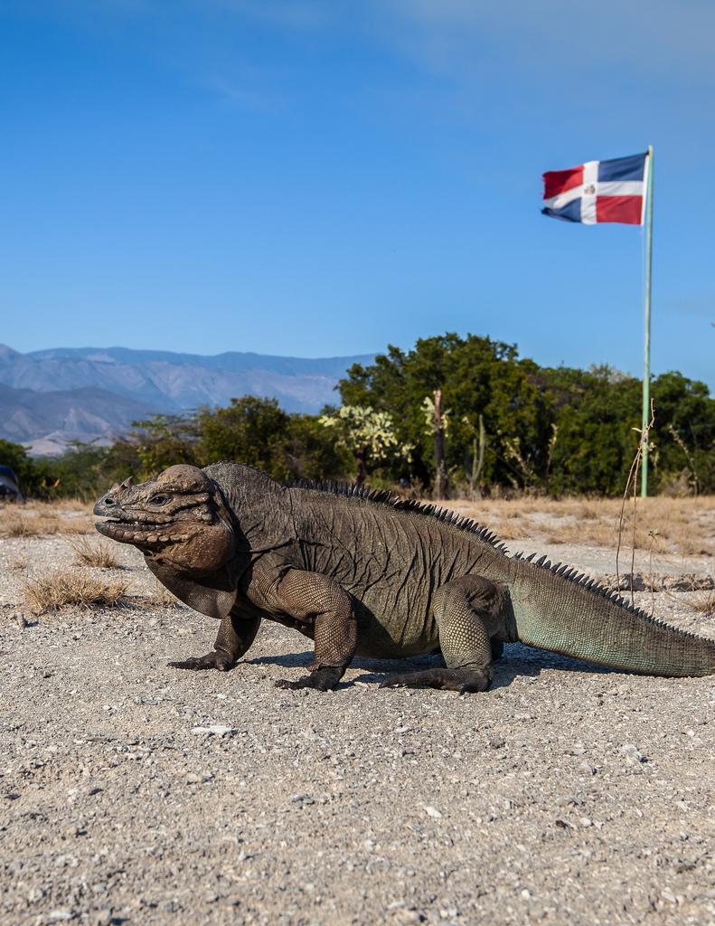 island-conservation-science-cabritos-island-dominican-republic- (6)