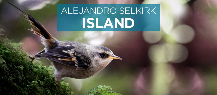 Island conservation science alejandro selkirk island chile