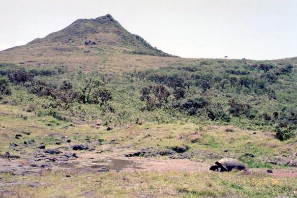 Island-conservation-chad-hanson-galapagos-2
