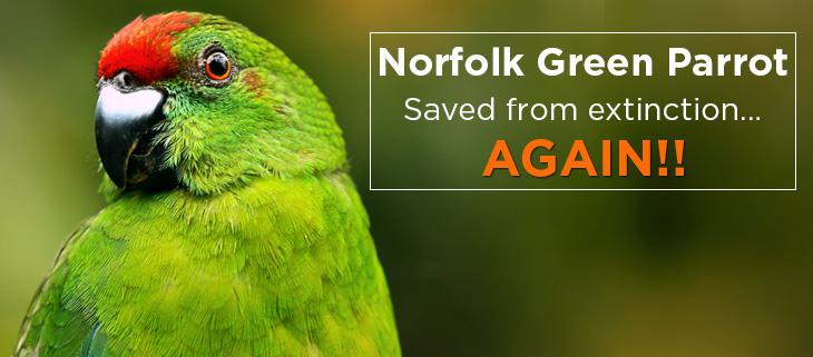 Island Conservation ray nias australia norfolk