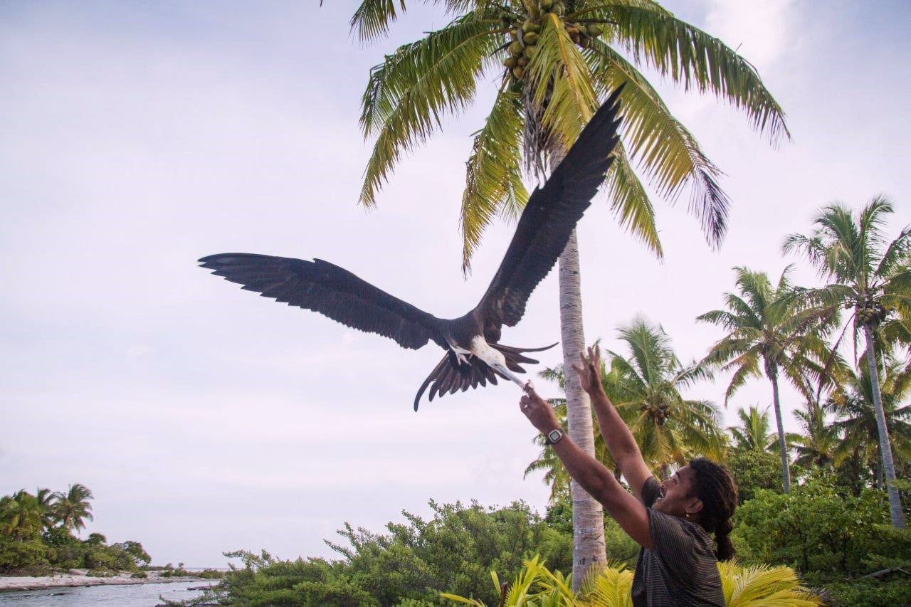 Island-conservation-acteon-gambier-Tommy-hall-6
