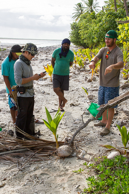 Monitoring for the presence of invasive predators on an atoll_20037806266_m