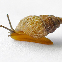 New-Snail-Species-Island-Conservation