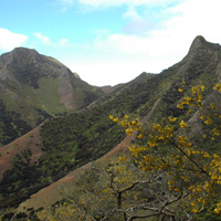 island-conservation-juan-fernandez-project-_0001_Layer 19