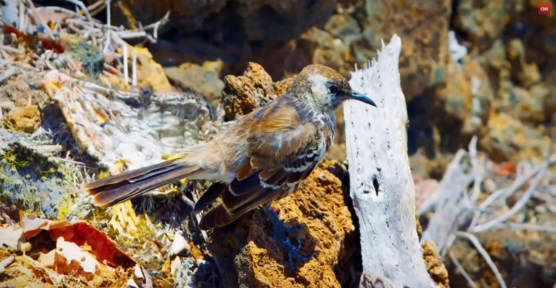 island-conservation-karl-campbell-cnn-bill-weir-the-wonder-list-6