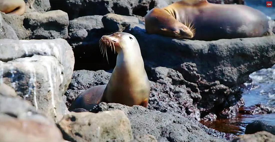 island-conservation-karl-campbell-cnn-bill-weir-the-wonder-list-7