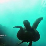 Island Conservation CNN Galapagos Karl Campbell
