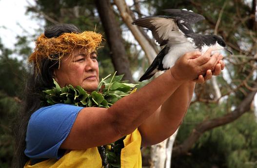 Lehua island Hawaii project sheerwater culture
