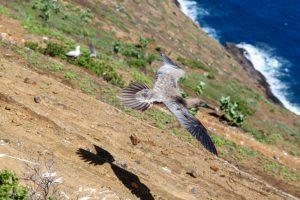 lehua island rock hawaii