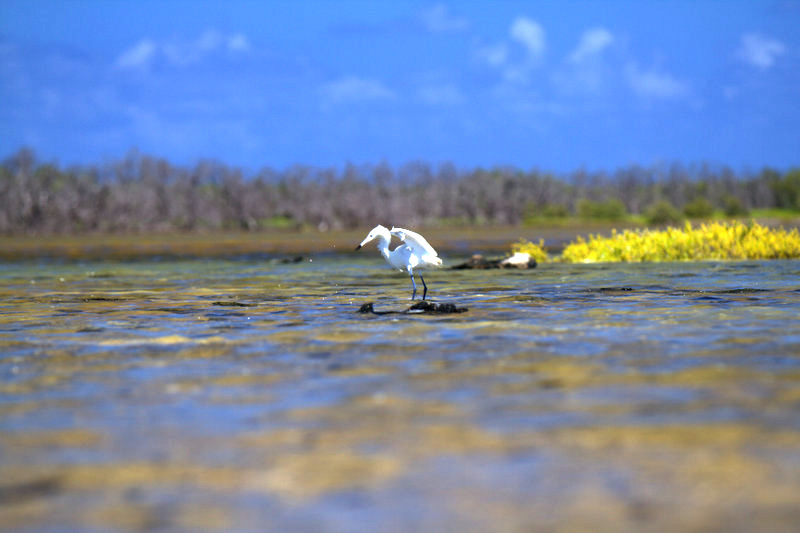 Island-Conservation-booby-cay-wes-jolley-4