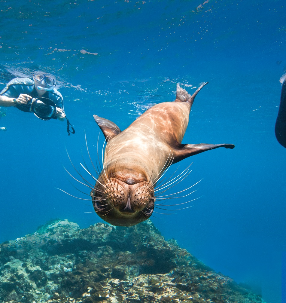 sea-lion-galapagos-latin-excursions