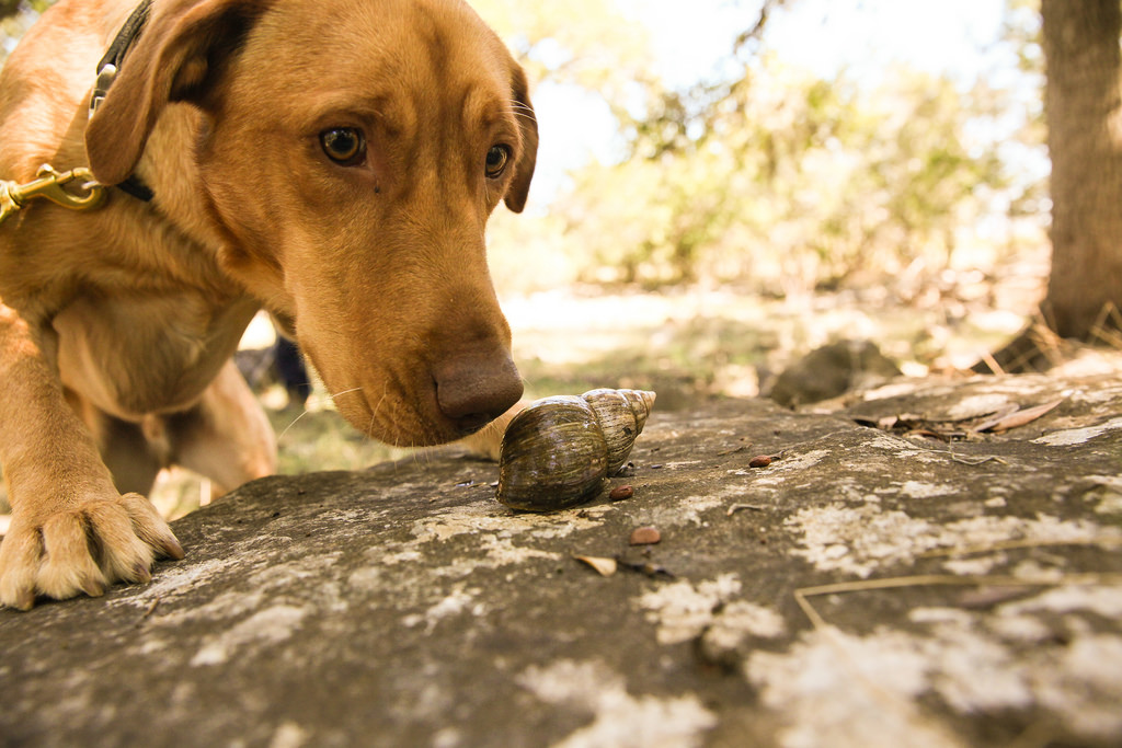 Dogs for Conservation based out of Texas trained the dogs_16677913477_l