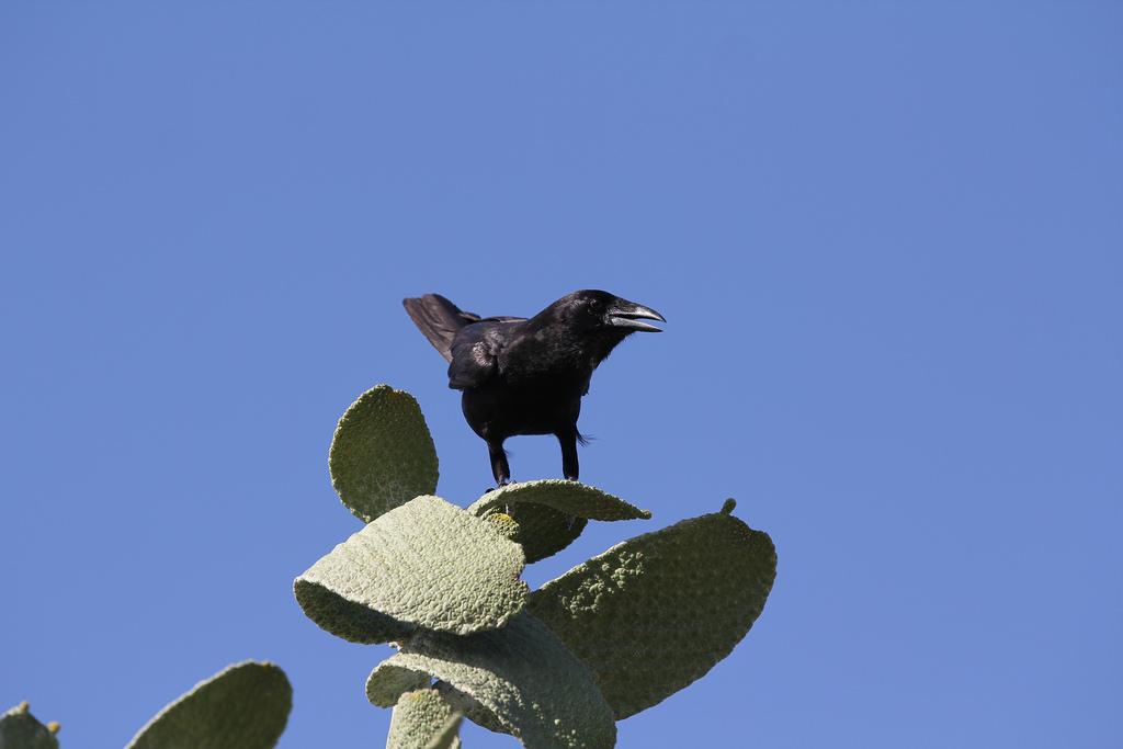 island-conservation-science-cabritos-island-dominican-republic- (2)