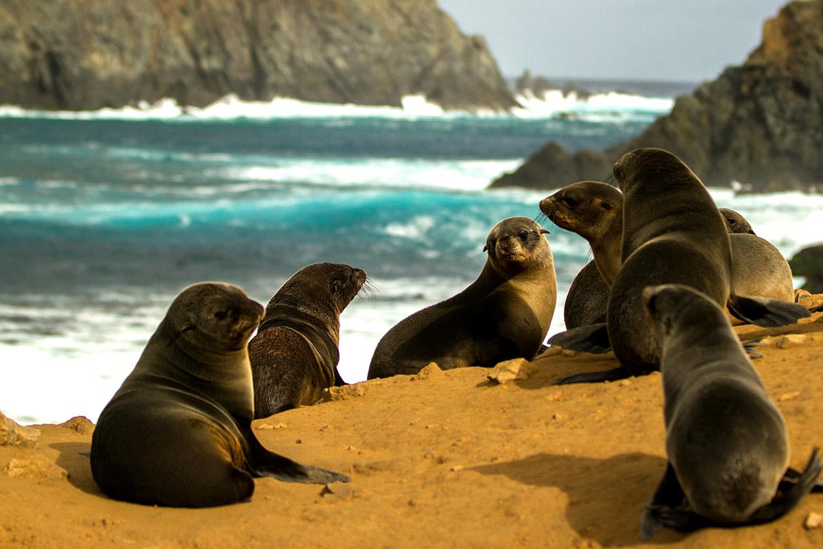 island-conservation-science-chile-desventuradas-island-2