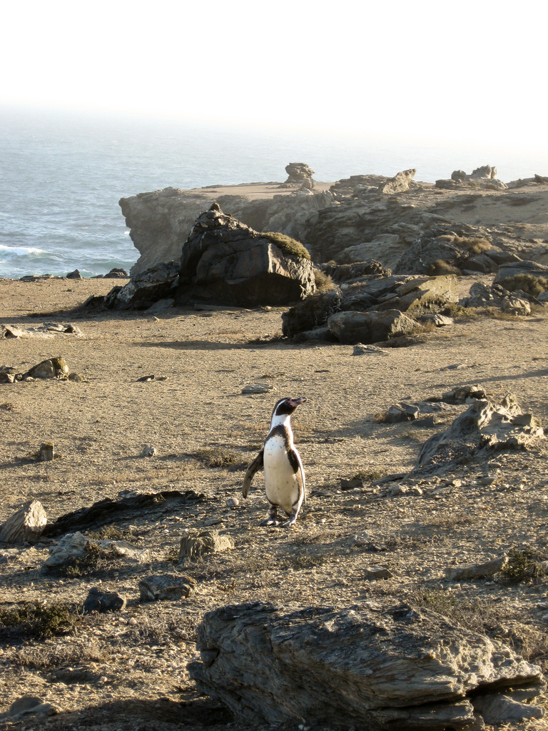 island-conservation-science-choros-island-chile- (1)