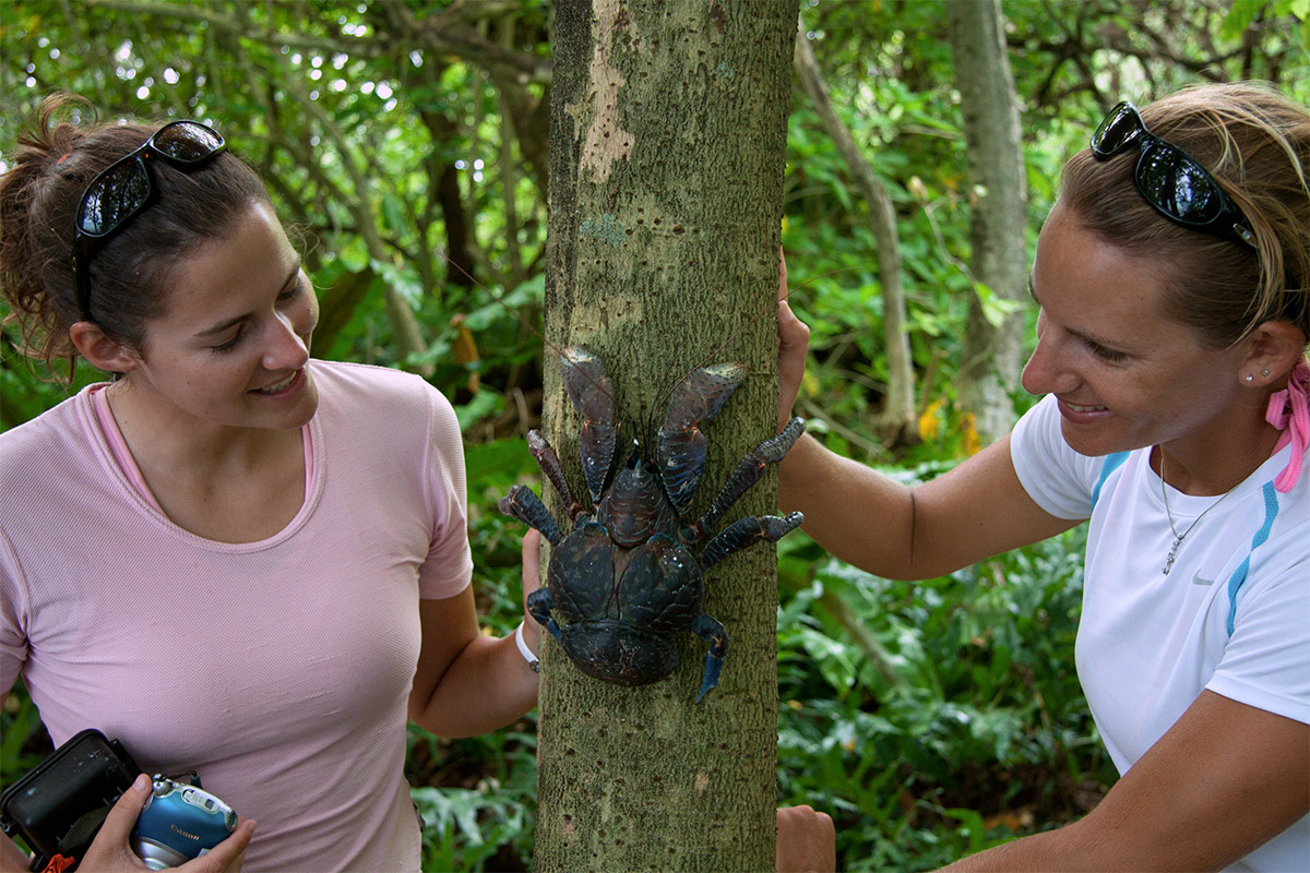 island conservation coconut crab palmyra atoll
