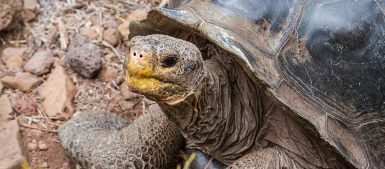 Island Conservation science pinzon island galapagos ecuador photo gallery