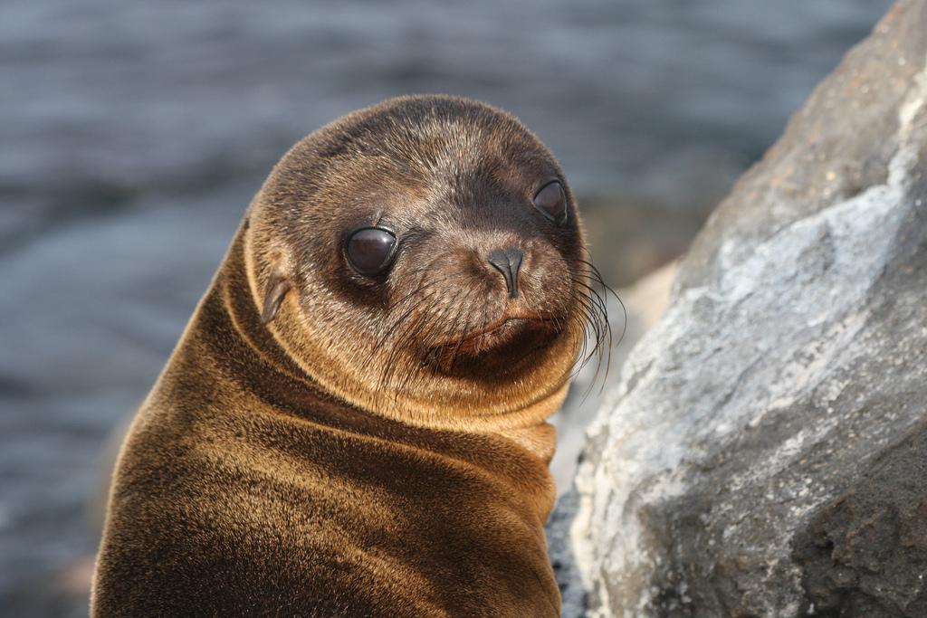 island-conservation-science-galapagos-pinzon-ecuador- (10)