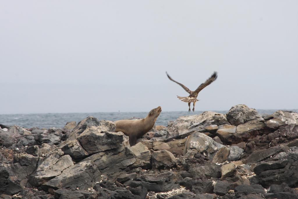 island-conservation-science-galapagos-pinzon-ecuador- (14)