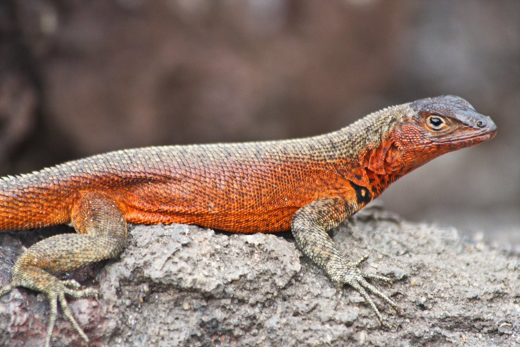 island-conservation-science-galapagos-pinzon-ecuador- (15)