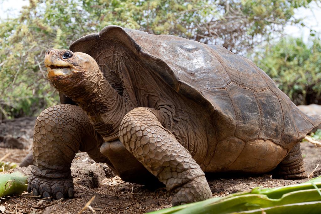 island-conservation-science-galapagos-pinzon-ecuador- (18)