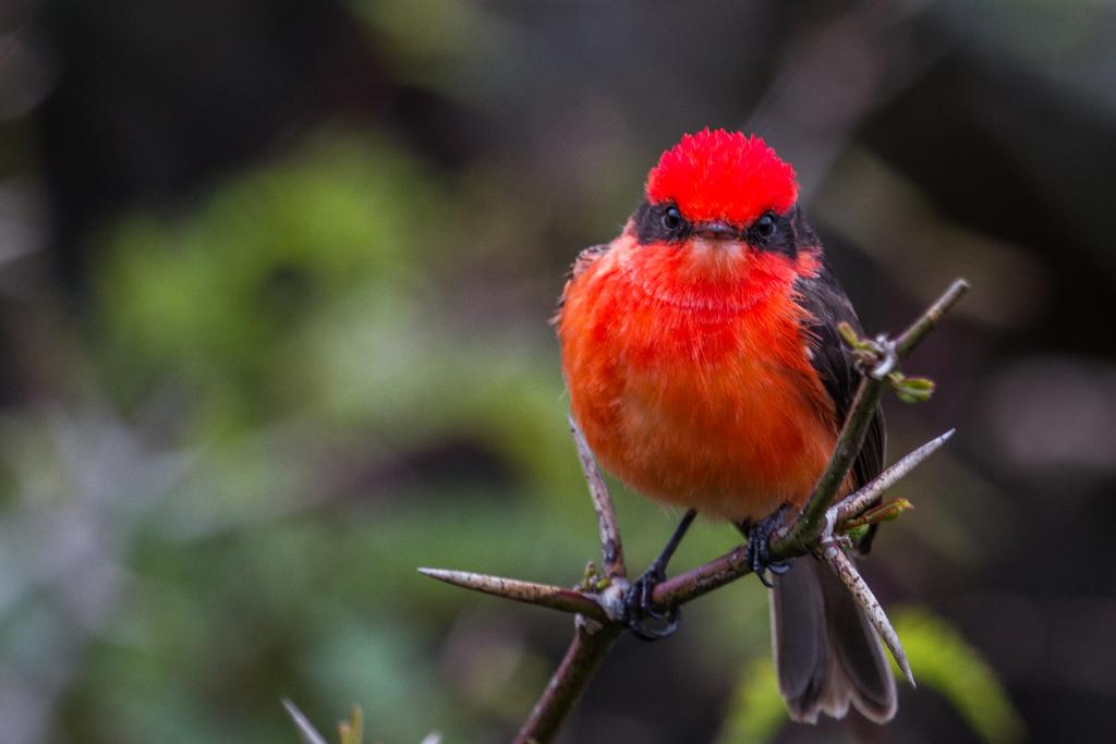 island-conservation-science-galapagos-pinzon-ecuador- (2)