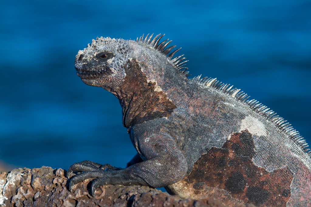 island-conservation-science-galapagos-pinzon-ecuador- (4)