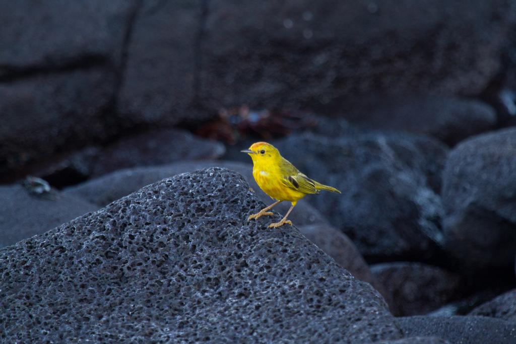 island-conservation-science-galapagos-pinzon-ecuador- (5)