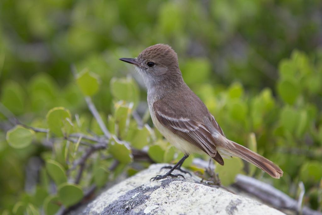 island-conservation-science-galapagos-pinzon-ecuador- (8)