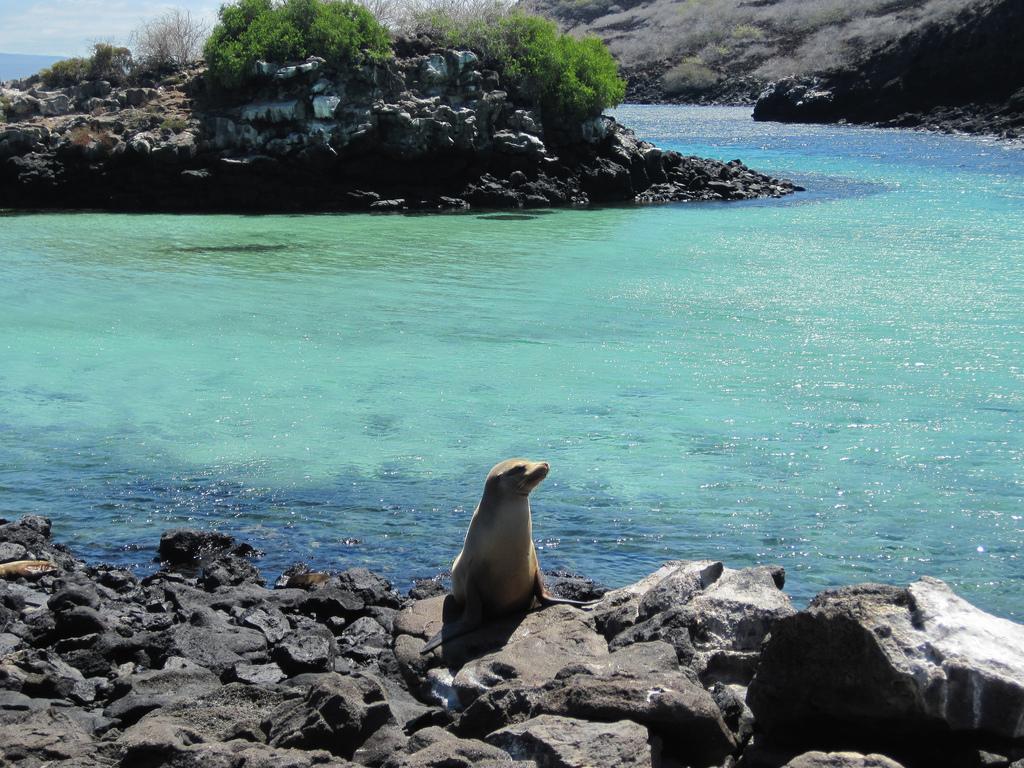 island-conservation-science-galapagos-pinzon-ecuador- (9)