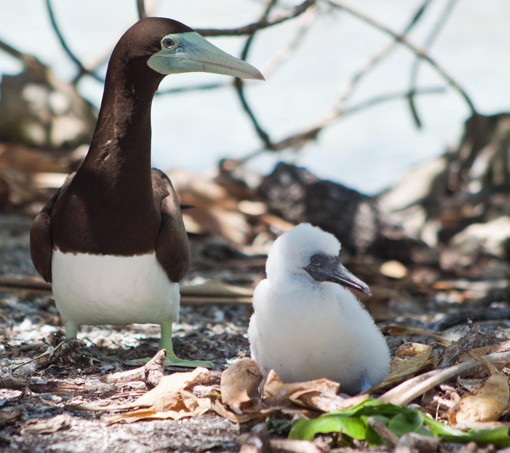 island-conservation-science-palmyra-atoll-line-islands-usa-photography- (1)