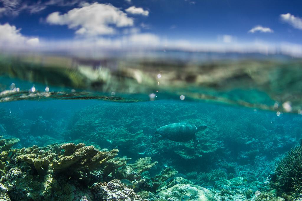 island-conservation-science-palmyra-atoll-line-islands-usa-photography- (10)