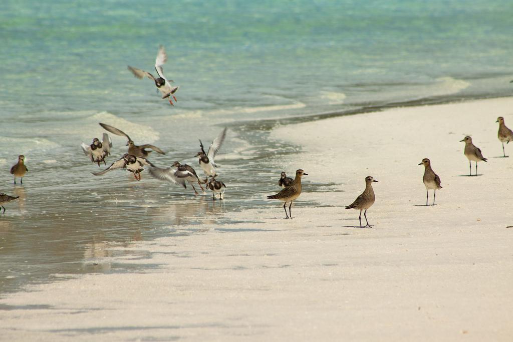 island-conservation-science-palmyra-atoll-line-islands-usa-photography- (12)