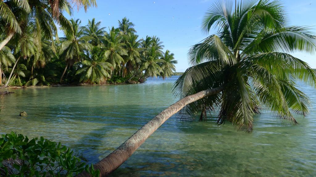 island-conservation-science-palmyra-atoll-line-islands-usa-photography- (18)