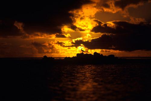 island-conservation-science-palmyra-atoll-line-islands-usa-photography- (20)