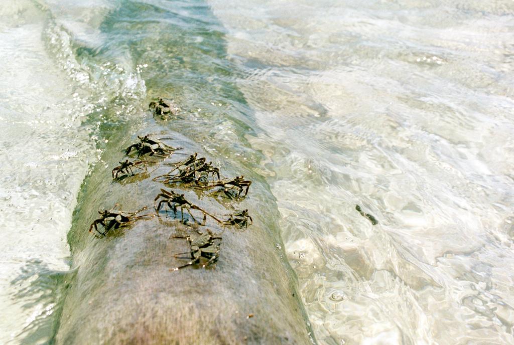 island-conservation-science-palmyra-atoll-line-islands-usa-photography- (22)
