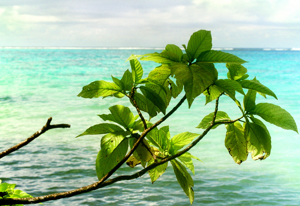 island-conservation-science-palmyra-atoll-line-islands-usa-photography- (24)