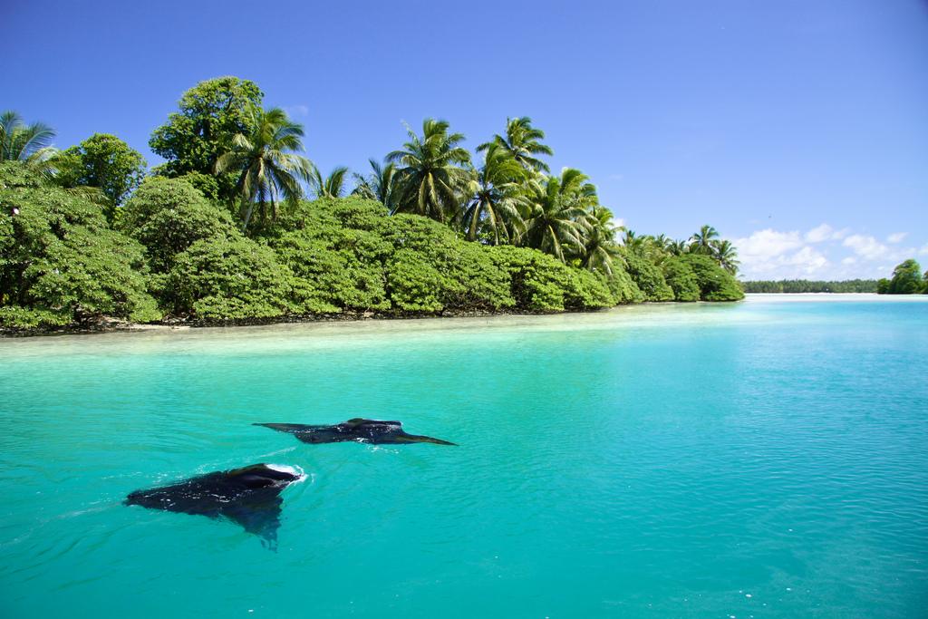 island-conservation-science-palmyra-atoll-line-islands-usa-photography- (25)