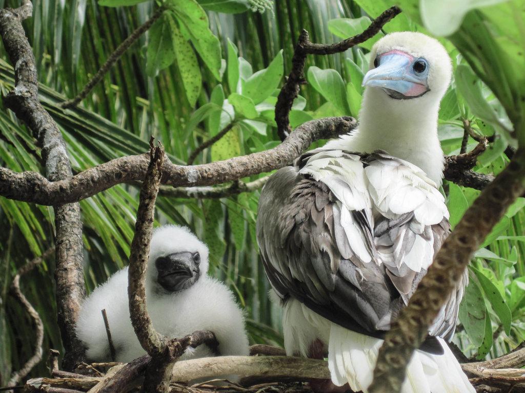 island-conservation-science-palmyra-atoll-line-islands-usa-photography- (35)