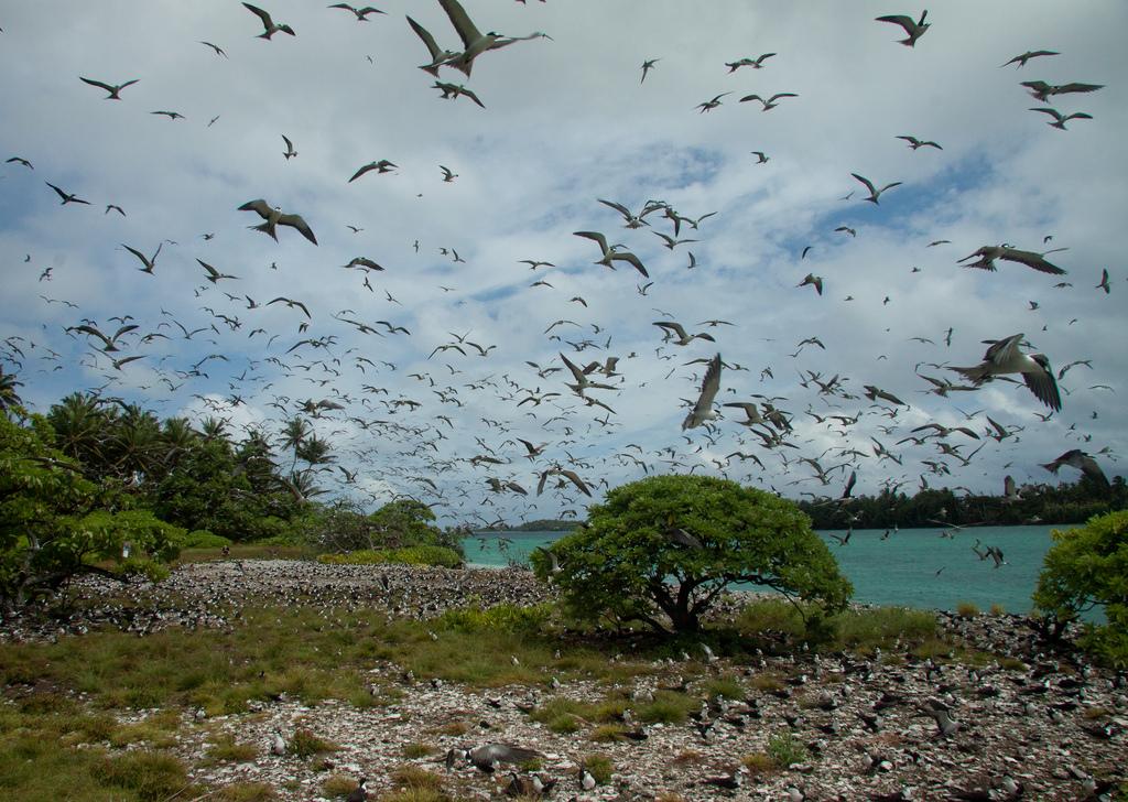island-conservation-science-palmyra-atoll-line-islands-usa-photography- (37)